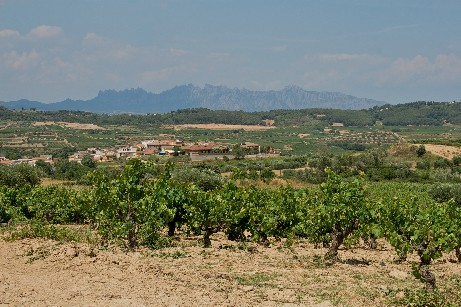 Penedes vineyards with Montserrat background